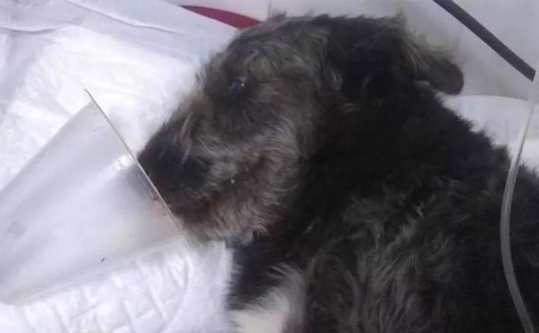 Cachorro salva menina de 12 anos de ataque de cobra e precisa ser internado