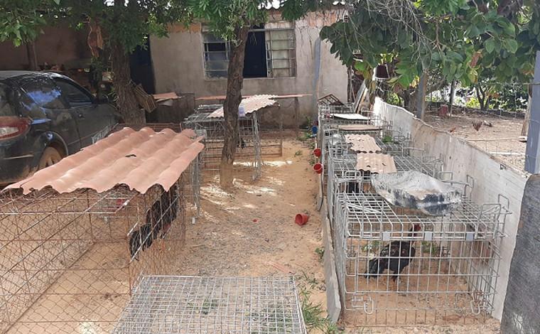 Homem é preso por maus tratos aos animais e porte ilegal de arma de fogo em Paraopeba