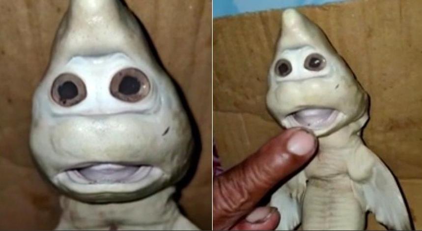 Pescador encontra filhote de tubarão com aspecto humano e internautas comparam com Zé Gotinha