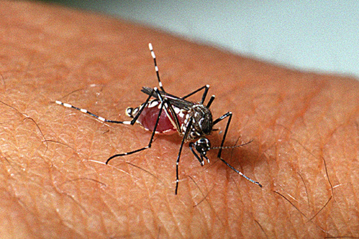 Sete Lagoas e seis cidades vizinhas estão em alerta contra o Aedes aegipti