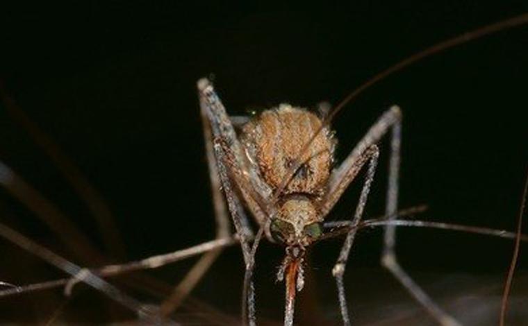 Vírus do Nilo Ocidental é detectado pela primeira vez em Minas Gerais