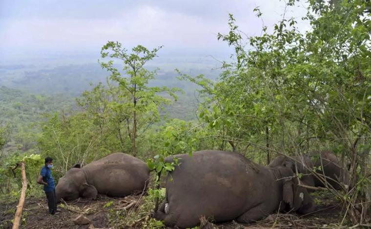 Raio pode ter matado 18 elefantes em reserva florestal na Índia