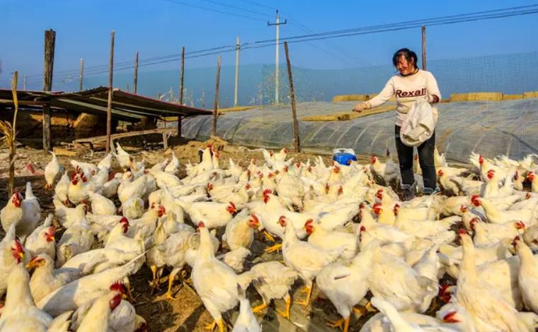 China confirma primeiro caso em humano da cepa da gripe aviária H10N3