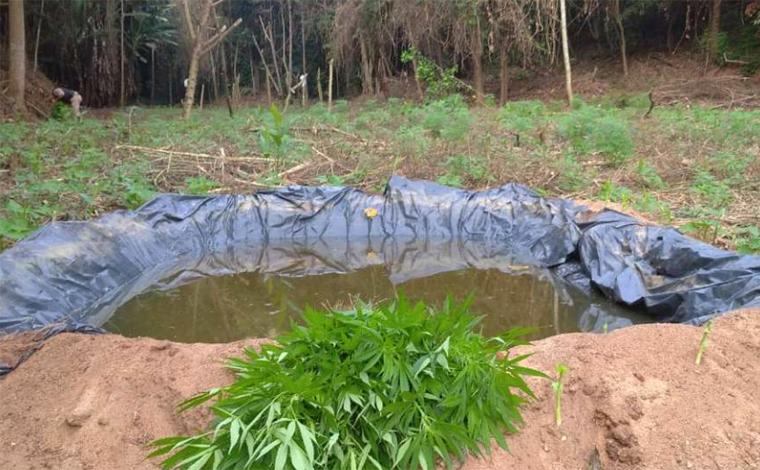 Polícia encontra plantação com cerca de 5 mil pés de maconha em mata do interior de Minas