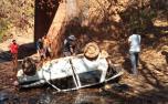Bebê é encontrado vivo entre os corpos dos pais após carro cair de ponte em Minas Gerais