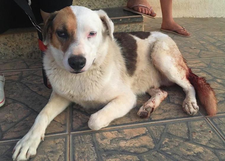 Homem é preso suspeito de tentar castrar cachorro violentamente no interior de Minas
