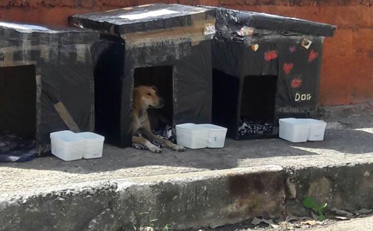 94d960bc21e Cerca de 40 animais de rua foram beneficiados pela ação dos voluntários